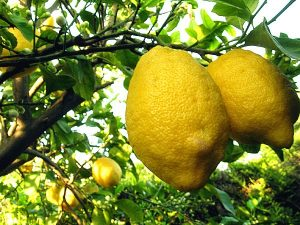 furto limoni siracusa times