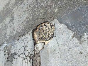 buca strada