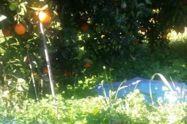 sventato furto agrumeto arance limoni siracusa times