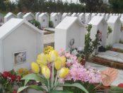 tombe-cane-cimitero