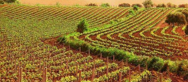 agricoltura sicilia - siracusatimes