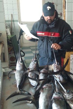 pesce spada sequestrato carabinieri siracusa times