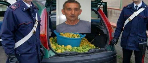 furto limoni - siracusatimes