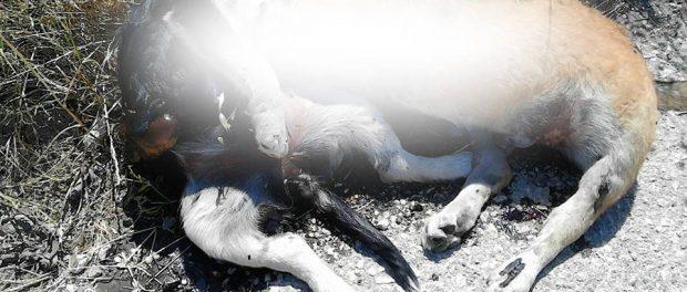 Cani morti Siracusa Times