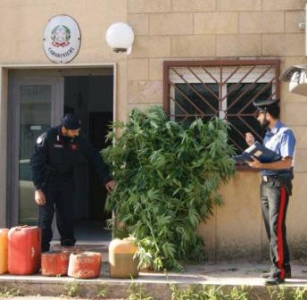 piante marijuana carabinieri siracusa times