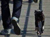 cane-a-passeggio-siracusa-times