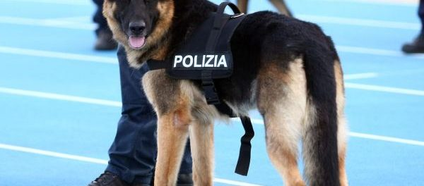 cane poliziotto siracusa times