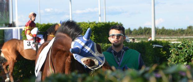 presentazione cavalli tondino siracusa times