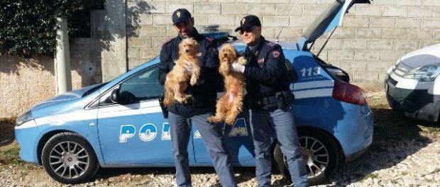 foto polizia cuccioli donna 63enne morta a sr siracusa times