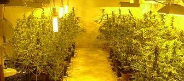 marijuana - siracusatimes