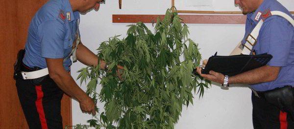 marijuana_cassibile - siracusatimes