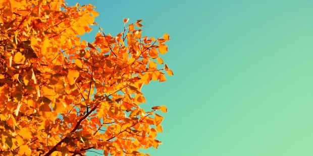 autunno-foglie-alberi-siracusa-times-min