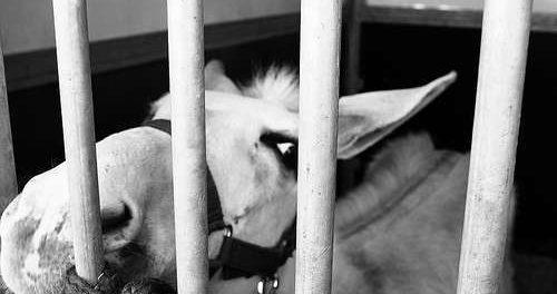 cavallo-drogati-siracusatimes