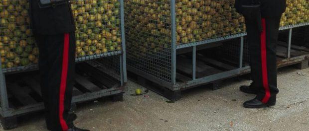 foto-2-ton-limoni